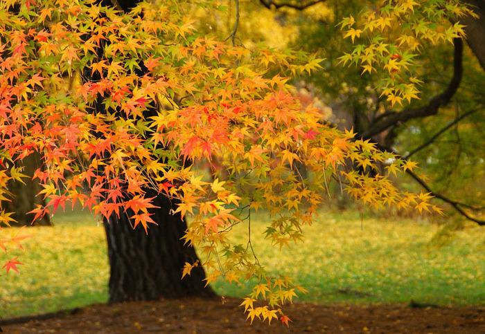 красивые фото осени киото япония 6 (700x483, 217Kb)