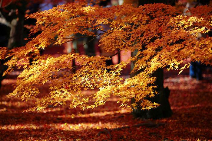 красивые фото осени киото япония 8 (700x467, 230Kb)