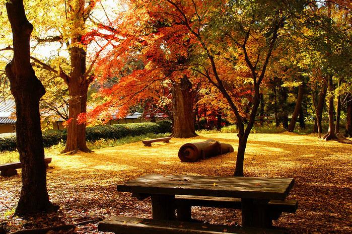красивые фото осени киото япония 10 (700x465, 293Kb)