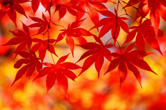 красивые фото осени киото япония 13 (700x465, 124Kb)