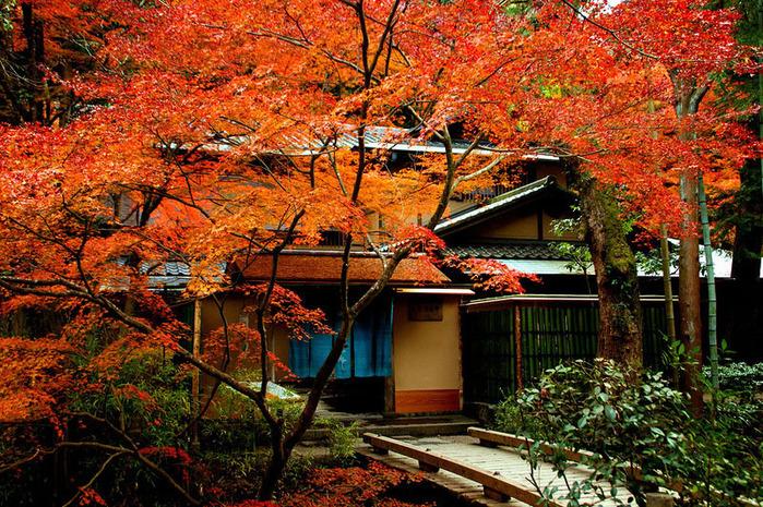 красивые фото осени киото япония 17 (700x465, 290Kb)