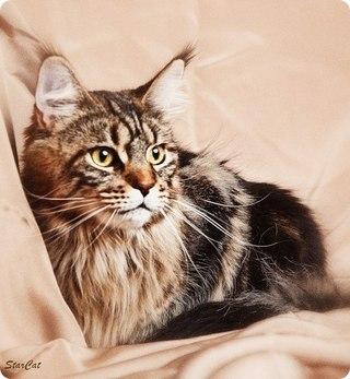 очень забавный кот/3518263_cyn (320x347, 29Kb)