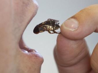 Поедатель тараканов (340x255, 20Kb)