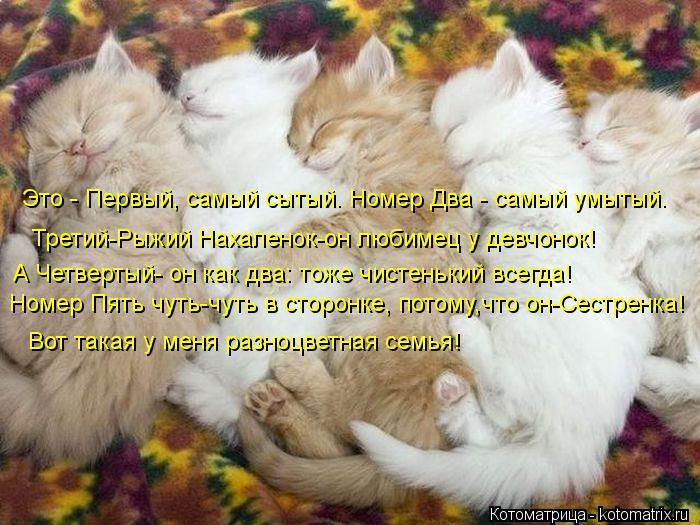 kotomatritsa_A (700x525, 80Kb)