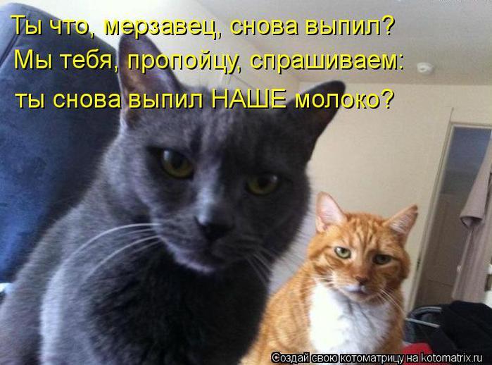 kotomatritsa_lz (700x518, 56Kb)