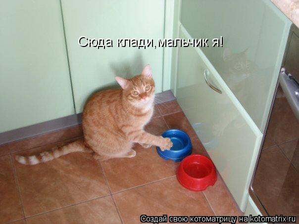 kotomatritsa_ZE (604x453, 32Kb)