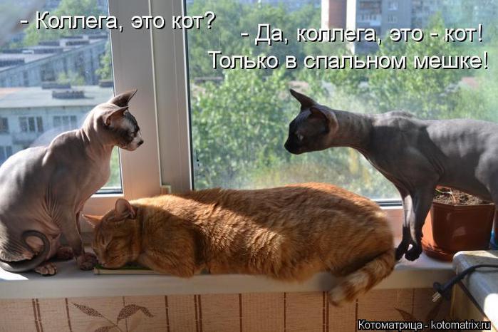 kotomatritsa_ZqU (700x466, 56Kb)