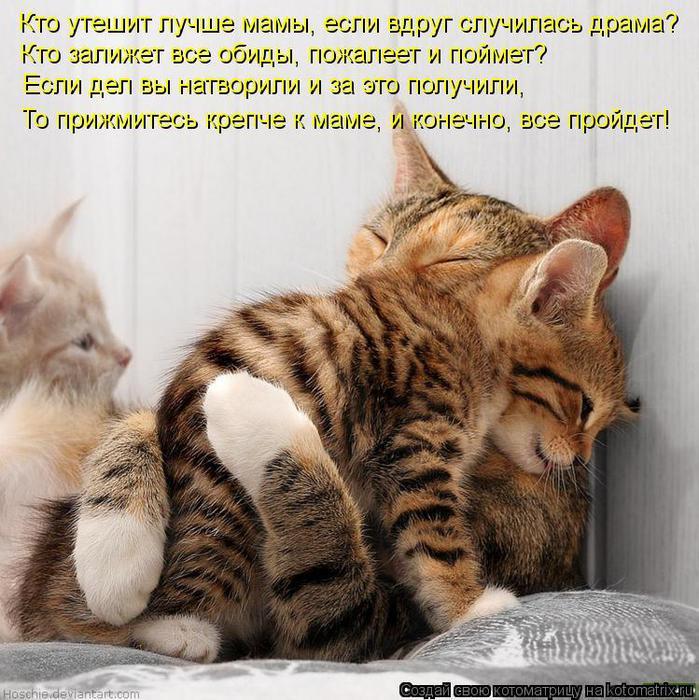 kotomatritsa_Pj (699x700, 98Kb)