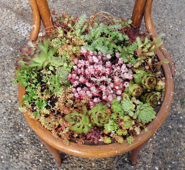 4497432_plantingflowersinchairs13 (600x550, 181Kb)