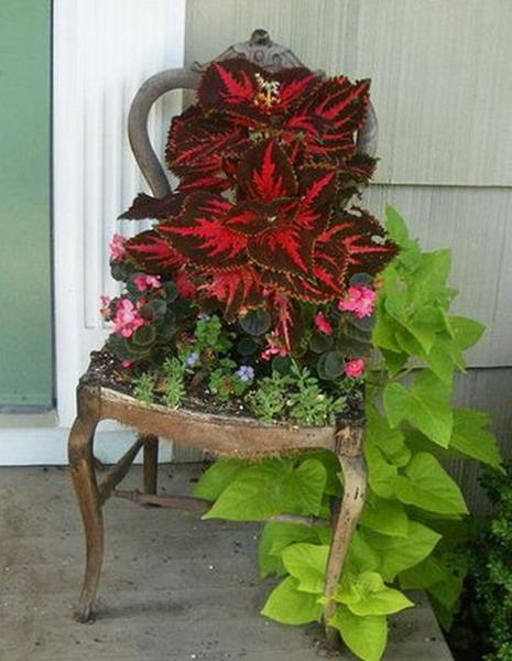 4497432_plantingflowersinchairs14 (465x600, 82Kb)
