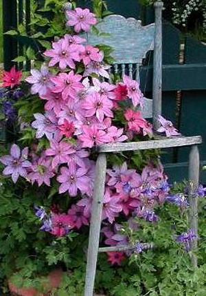 4497432_plantingflowersinchairs33 (300x430, 60Kb)