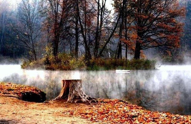 Осенний лес 5 (618x401, 87Kb)