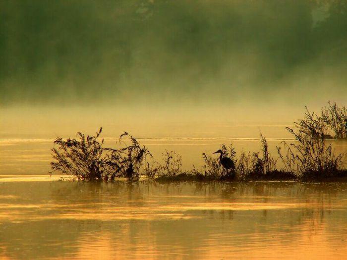 Дрофа на озере/2932470_7a (700x525, 46Kb)