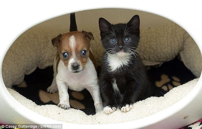 смешные фото щенков и котят (700x447, 111Kb)