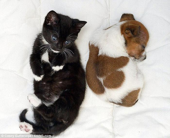 смешные фото щенков и котят 2 (700x572, 148Kb)