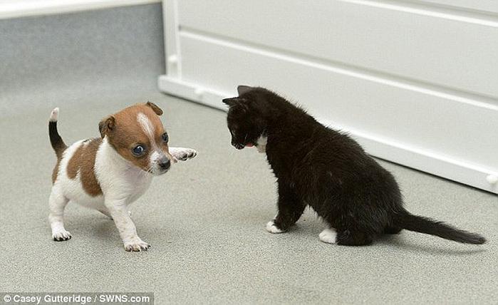 смешные фото щенков и котят 4 (700x428, 108Kb)