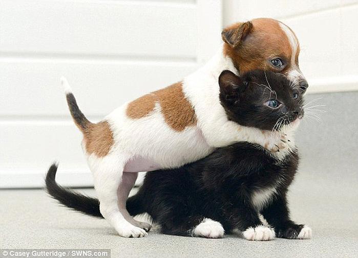 смешные фото щенков и котят 5 (700x505, 120Kb)