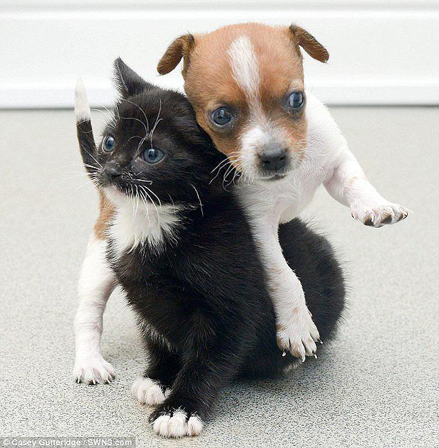 смешные фото щенков и котят 6 (634x647, 155Kb)