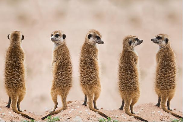 3-Time-Amazing Moms-animals (607x403, 121Kb)