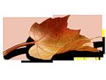 4511063_0_6d9c7_e11c19f9_S_jpg (150x113, 16Kb)
