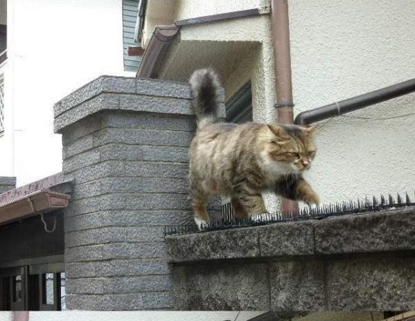 прикольные фото котов и кошек 1 (599x464, 51Kb)