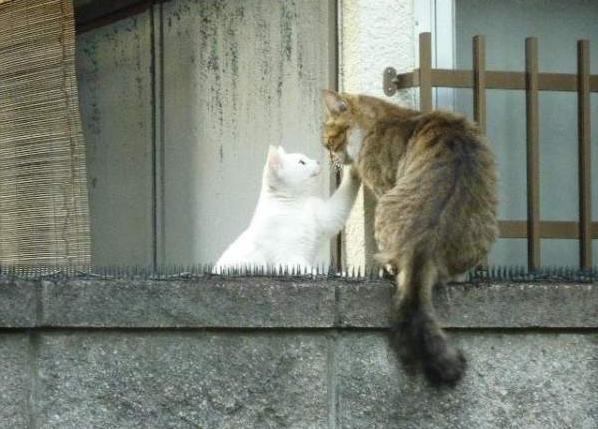 прикольные фото котов и кошек 3 (598x429, 43Kb)