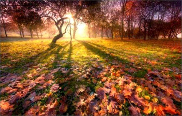 Осенний свет 2 (618x393, 61Kb)