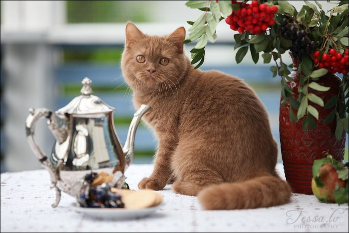 котята от Tess