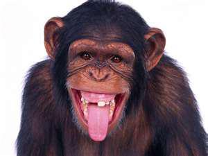 macaco-sorridente (300x225, 11Kb)