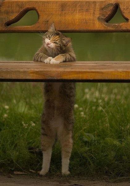 прикольные фото кошек (421x604, 47Kb)