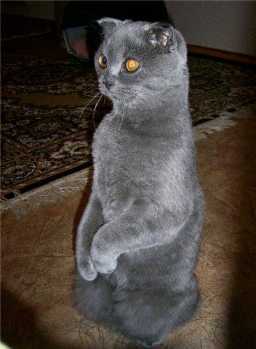 Кот и суслик