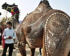 Верблюд стриженный (233x186, 27Kb)