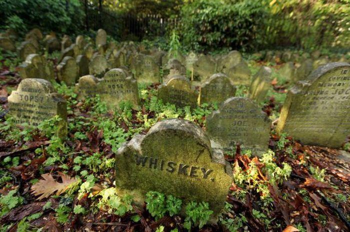 1293009241_pet_cemetery_05 (700x465, 86Kb)