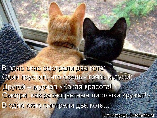 kotomatritsa__P (604x453, 80Kb)