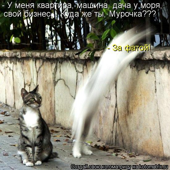 kotomatritsa_ma (550x552, 71Kb)
