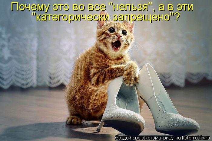 kotomatritsa_MW (700x467, 56Kb)