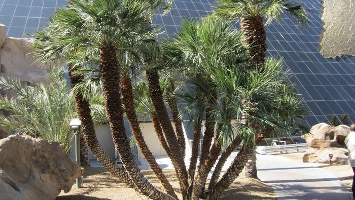Отель Luxor hotel и Casino, Las Vegas - Пожить в пирамиде. 73163