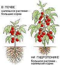 hydroponics-2-1 (200x214, 13Kb)