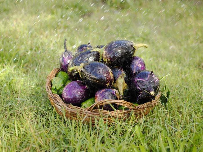 4572018_eggplant (700x525, 84Kb)