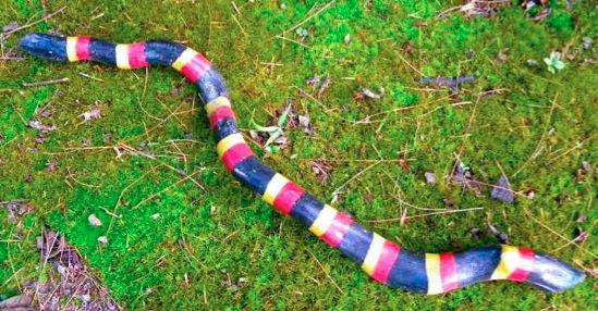 Как сделать змею своими руками для ребенка 318