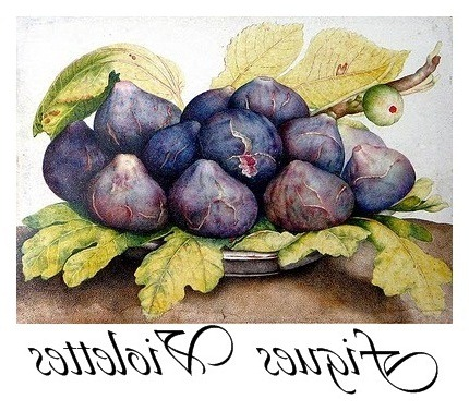 figues violettes transfer[5] (430x377, 74Kb)