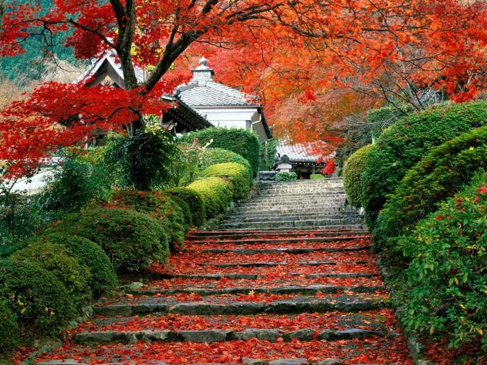 осень в японии (700x525, 197Kb)