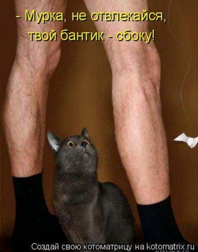 кот подглядывает (393x500, 34Kb)