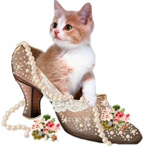 Котик в туфле -Оля (500x511, 156Kb)