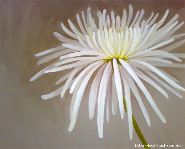 chrysanthemum-by-helen-sturge (600x481, 95Kb)