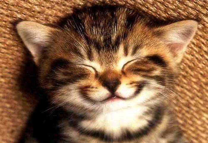 От улыбки станет всем светлей 7 (700x482, 71Kb)