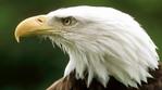 Превью Eagle (1) (700x388, 183Kb)