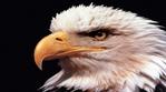 Превью Eagle (4) (700x388, 190Kb)