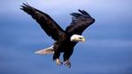 Превью Eagle (17) (700x388, 155Kb)