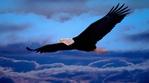 Превью Eagle (21) (700x388, 191Kb)